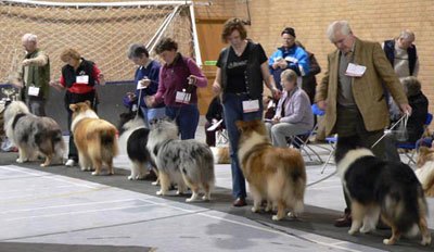 Collie Show